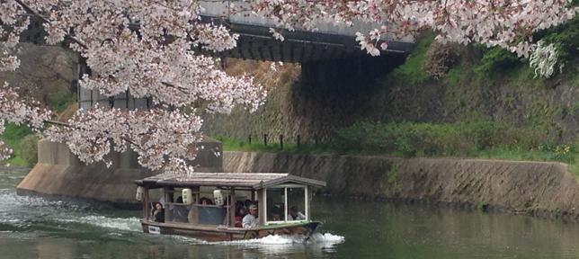 【イベント開催報告】みんなで桜まつりに行きましょ!を開催しました。