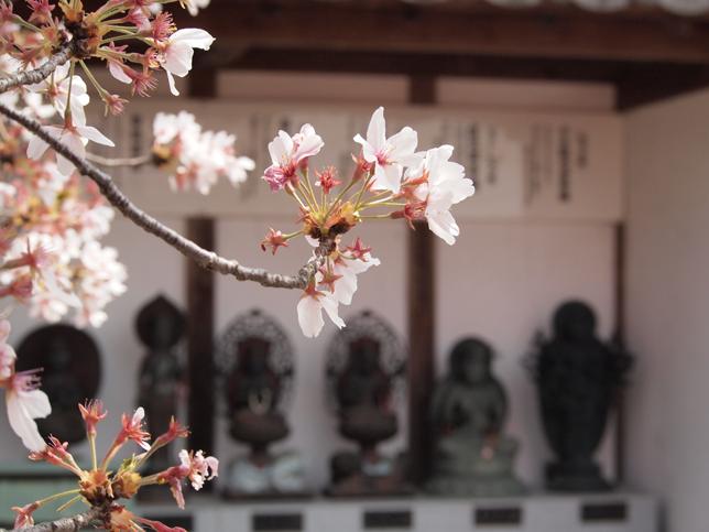 桜とお地蔵さん | あなたの想いをプロデュース Acca