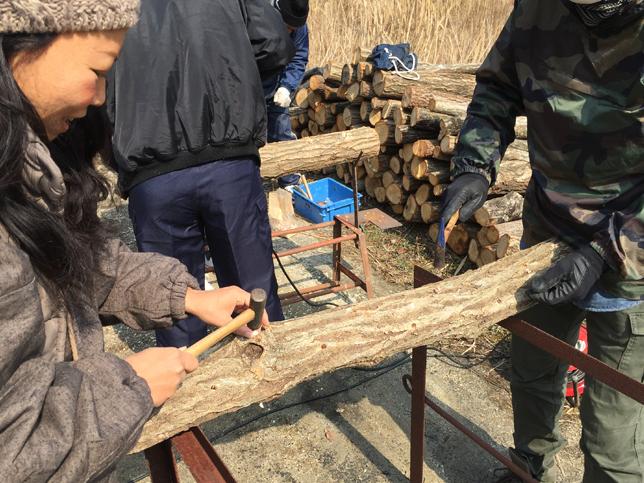 椎茸菌を植える作業