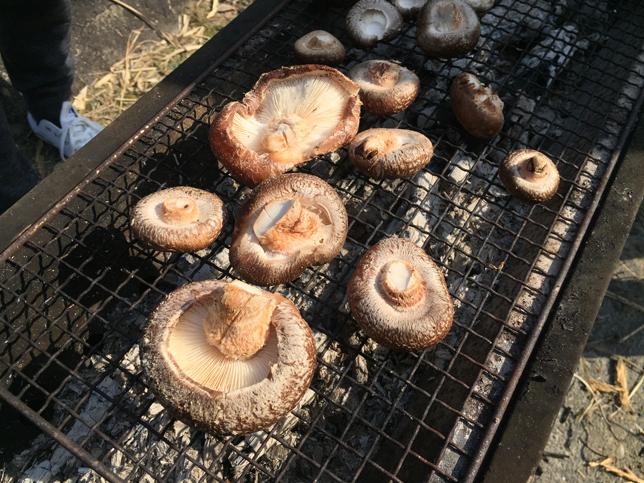 炭火焼き椎茸