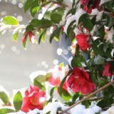 【Photo Album】雪景色   Acca's Website