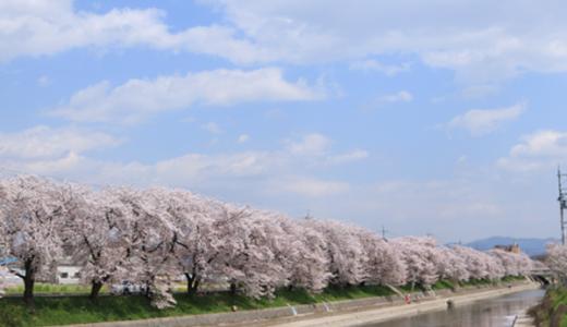 【Photo Album】近所の桜並木