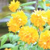 【Photo Album】松尾大社   Acca's Website