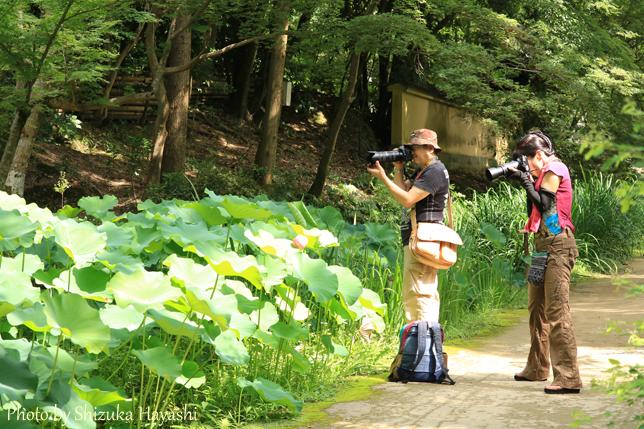 【Photo】唐招提寺へ、蓮を撮りに行って来ました!| Acca
