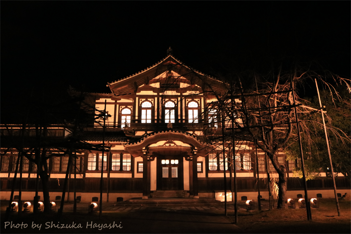 【Photo Album】しあわせ回廊なら瑠璃絵2018 & 奈良公園界隈   Acca's Website