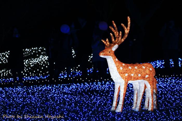 【Photo Album】しあわせ回廊なら瑠璃絵2018 & 奈良公園界隈 | Acca's Website