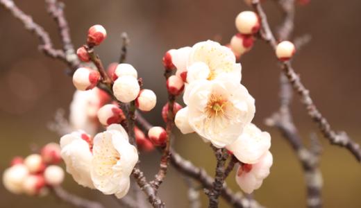 【Photo Album】けいはんな記念公園 & 水景園@京都府相楽郡精華町・2
