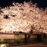 【Photo Album】夜桜 in 安福寺@京都府木津川市 | Acca's Website